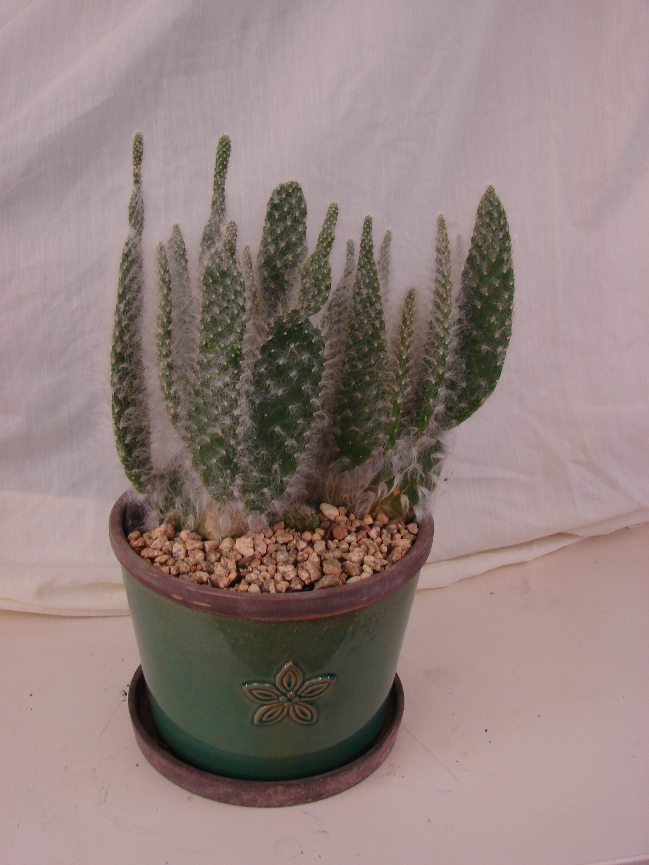 Cactus Fuzzy In Ceramic Pottery Williams Fresh Floral